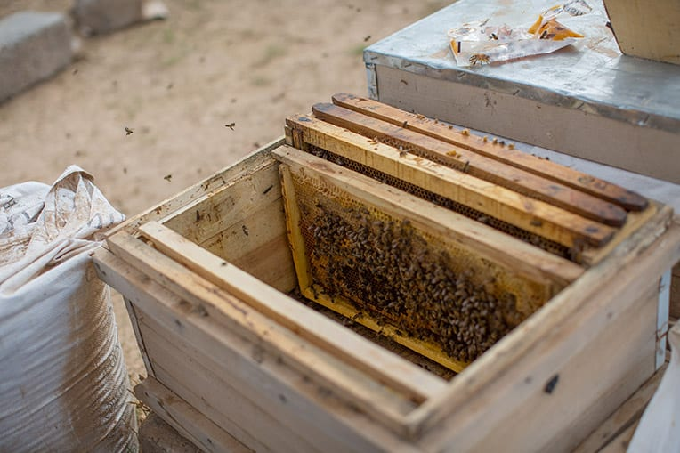 God used bees to help restore hope to Kameela.