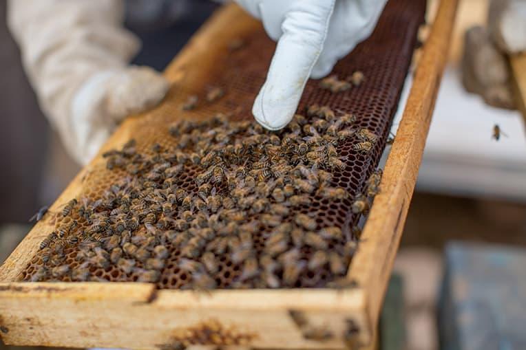 Samaritan's Purse bee project is restoring livelihoods to Yazidis in Sinjar province.