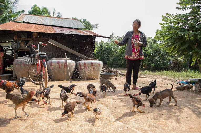 Pha learned how to raise healthy chickens that she  can sell in the local market.