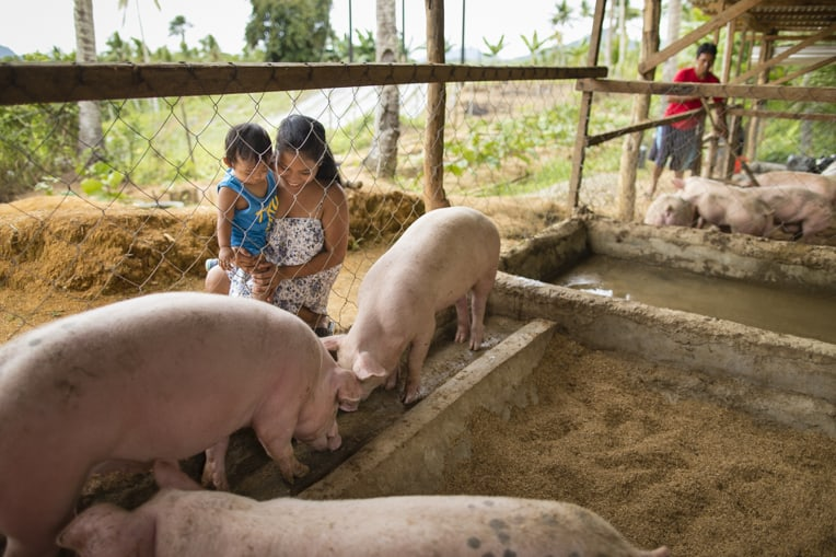 Our teams provided livestock, pig pen materials, and training on how to build the pig pen.