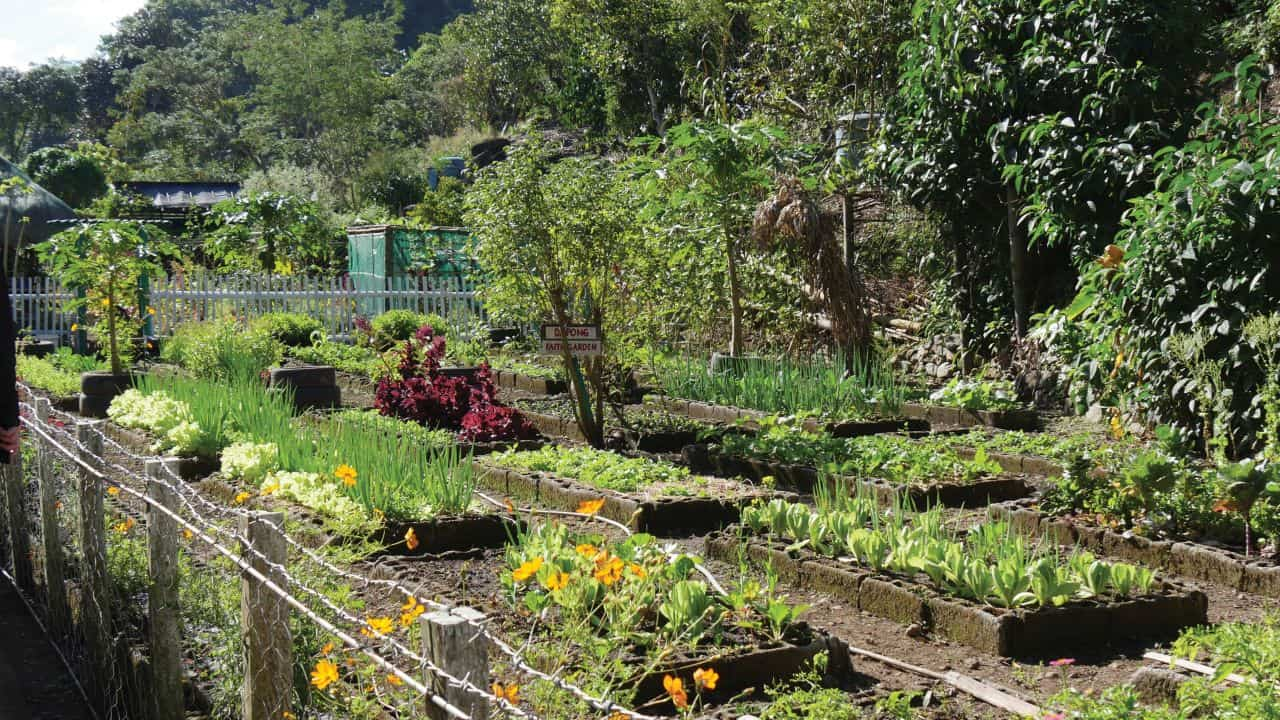 This community garden provides healthy food to Rita's community and to a local orphanage.