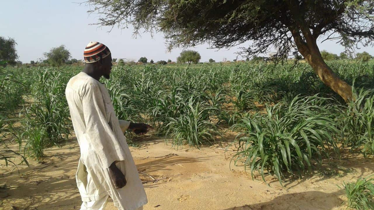 Haido Abdou walking through his small farm plot that Samaritan's Purse helped train him to grow.