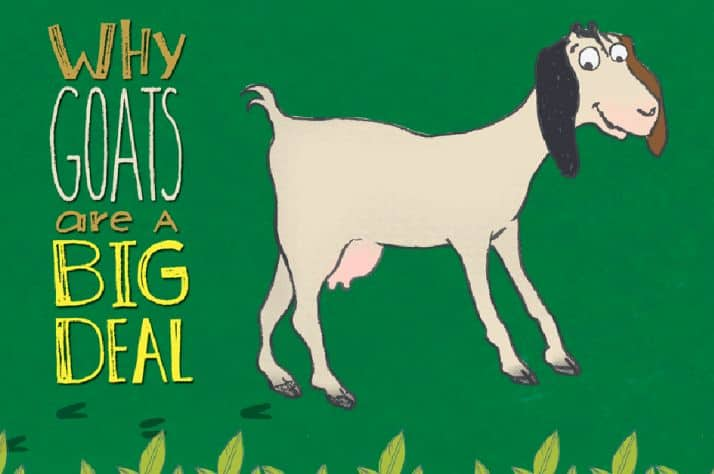 Why goats from our gift catalog are a big deal