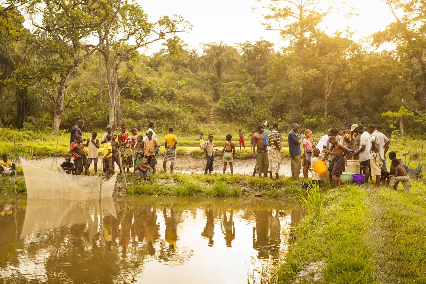 The muddy fish ponds are located deep in the  jungle of Liberia.